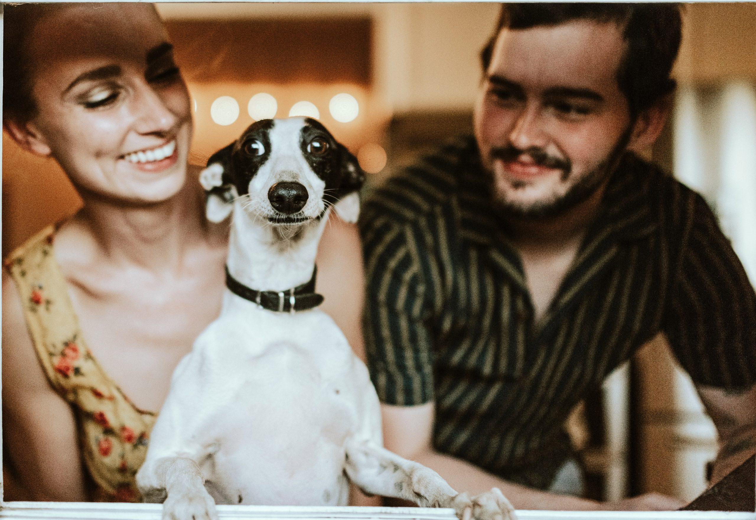 cão em hotel